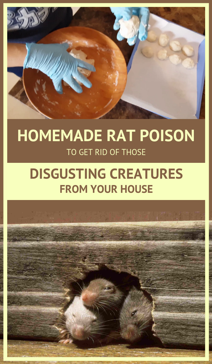 Homemade Rat Poison To Get Rid Of Those