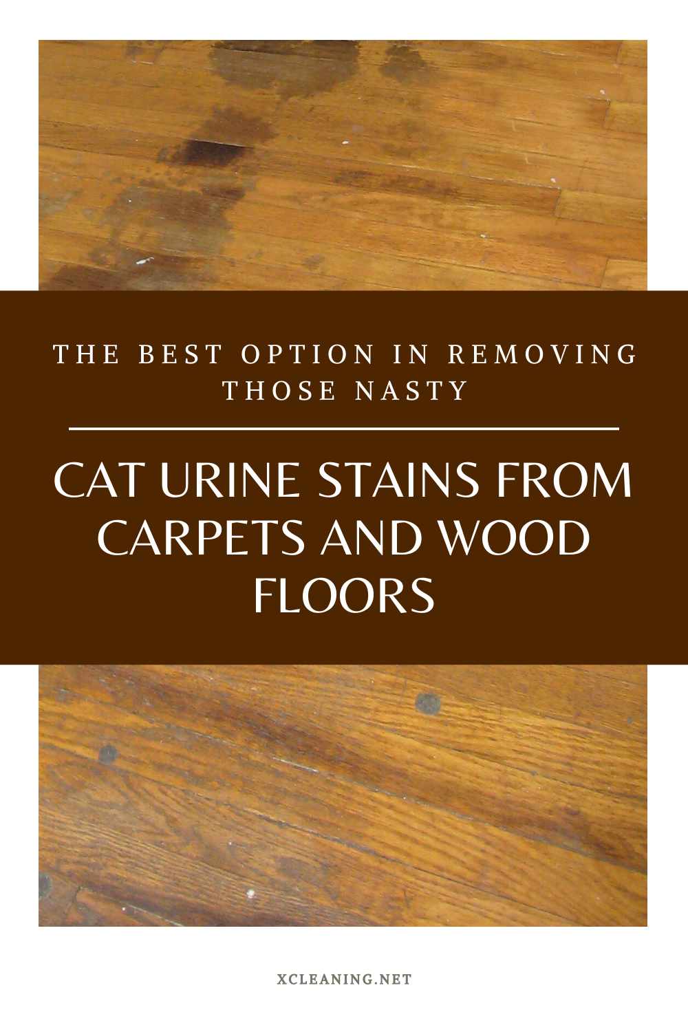 The Best Option Removing Those Nasty Cat Urine Stains From Carpets And Wood Floors