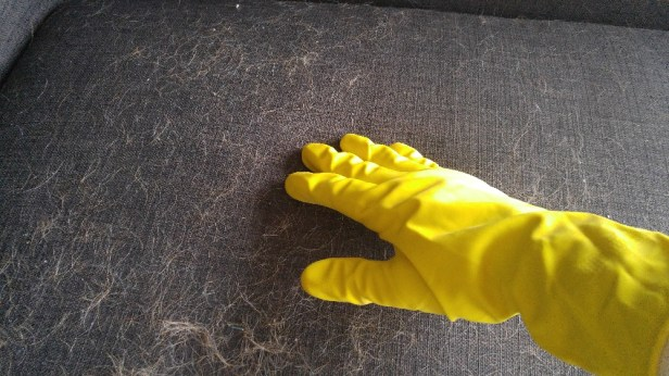 Rubber Gloves Action To Remove Pet Hair Off Sofa   xCleaning.net - Your  Cleaning Tips