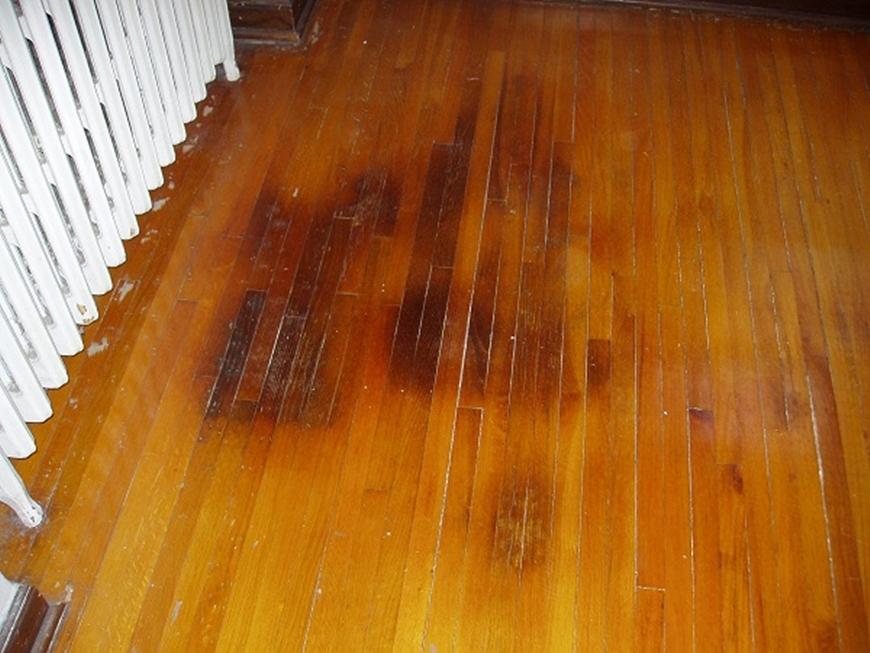 Cat Urine Smell From Hardwood Flooring